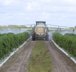Le Roundup de Monsanto détruit les cellules rénales humaines