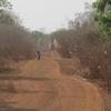 Bénin Piste transversale Restes de coton sur les arbres en bord de piste