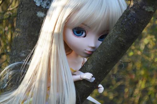 Séance 17. Sur une branche