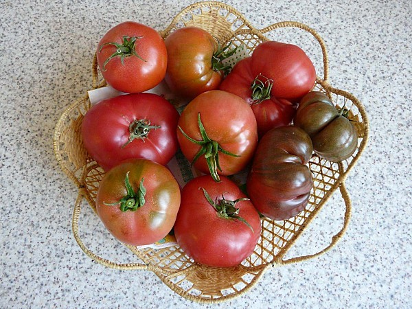 Tomates-Rose-de-Berne---Noire-de-Crimee--27-09-12-P1310252.JPG