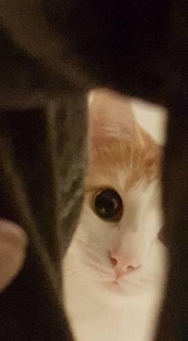 L'image contient peut-être: chat