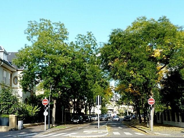Rue de Salis Metz 21 Marc de Metz 12 10 2012