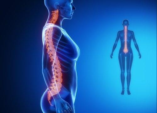 La connexion entre la colonne vertébrale et les autres organes
