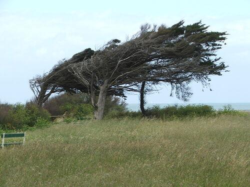 Le phare de Chassiron un après midi de mai