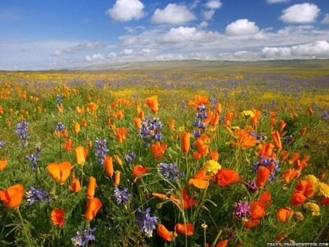 3. The colorful plains of Deosai