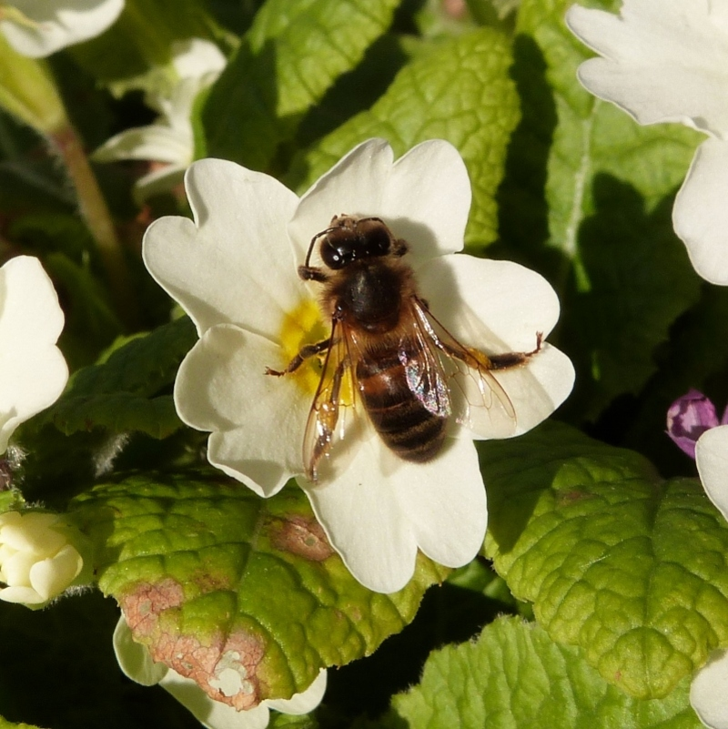 Les abeilles sont de retour...