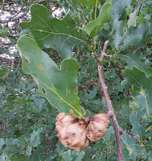 Des nids inconnus