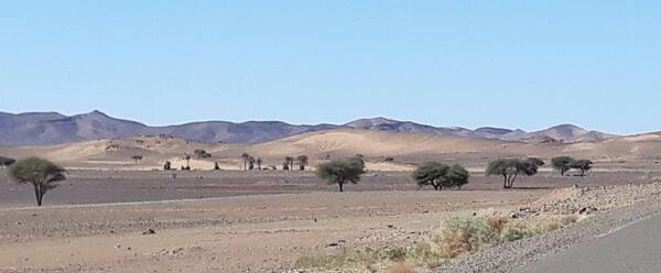 Des paysages désertiques piquetés d'acacias