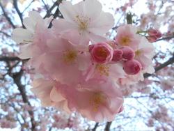 Ah ! un air de printemps pour la semaine prochaine