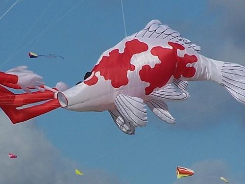 cerf volant014