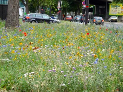 herbes folles Paris fleurs