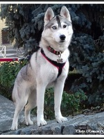 Leska (20 mois)