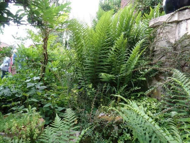 le jardin de Dominique