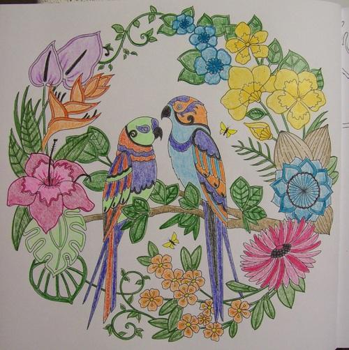 Coloriage - Jungle magique