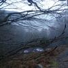 Dans le bois de Sansanet les branches transpirent