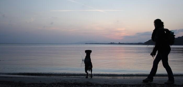 Mon copain est parti au paradis des chien