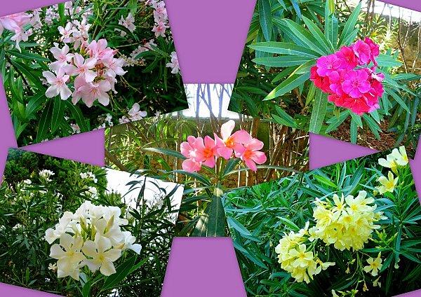 Le vieil Istres et le jardin ste Catherine5