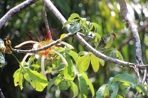 Tortuguero (Costa Rica) suite