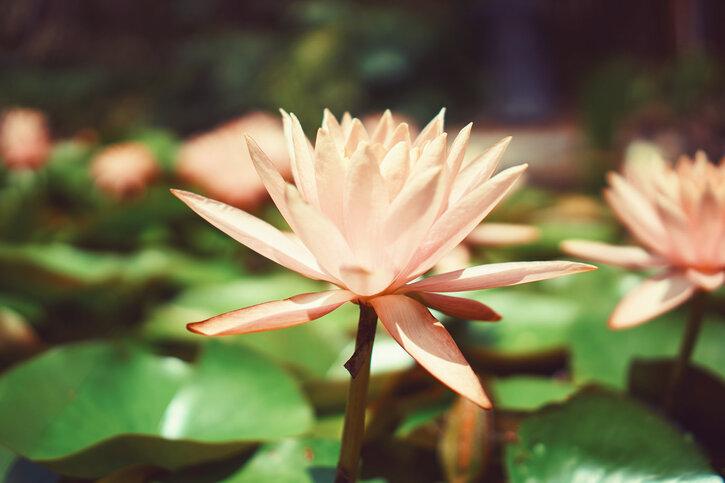 14 Images de fleurs - 2