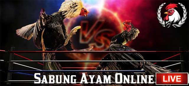 Judi Ayam Online S128