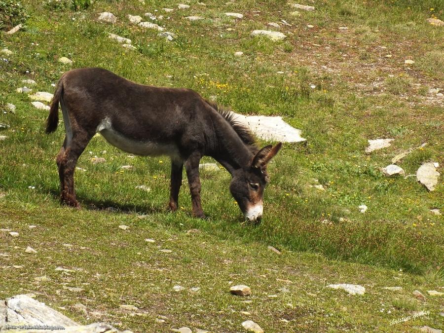 Le refuge du Carro (vanoise)2760 m