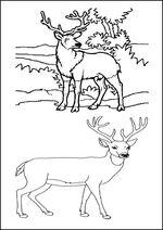 coloriage des animaux de la forêt