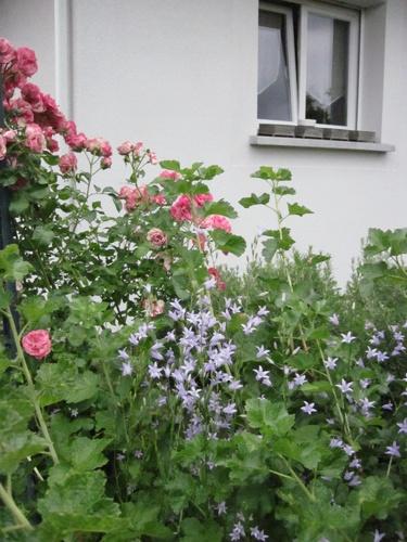 mon jardin landais début juin 2012