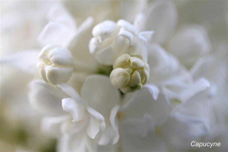 blanc 7337