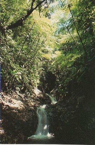 cascades,sentier le pre^cheur grd -riv 001