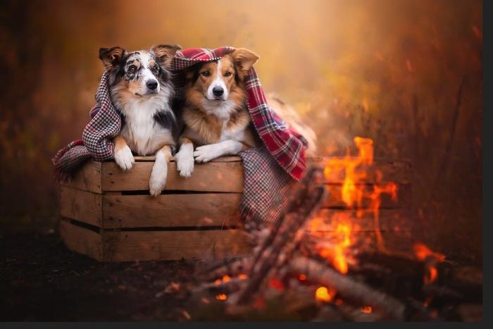 Adorable photographie de chien qui vous rendra heureux par Alicja Zmyslowska