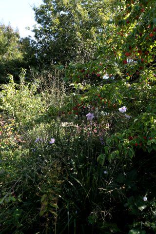 Epimedium, c'est aussi des bulbes de printemps