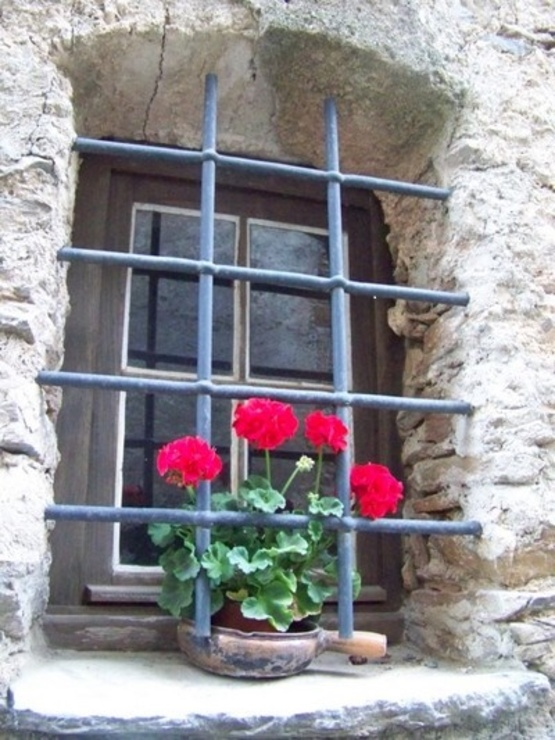 libertà per i mo fiori