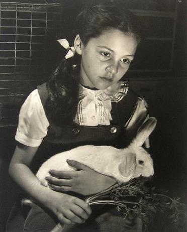 05 - Des histoires de lapins en photo, suite