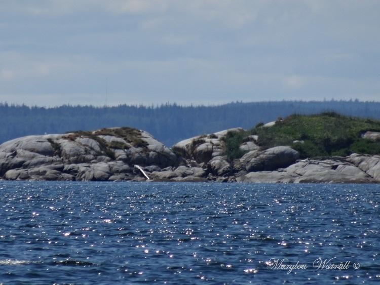 Nouvelles du Canada 123 : Sur le trajet du retour