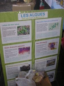 les_grandes_mar_es_de_la_Bernerie_2008_010