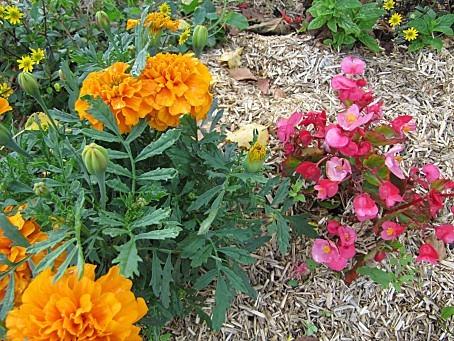 fleurs-4171.JPG