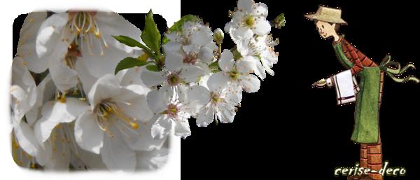 design cerisier en fleur