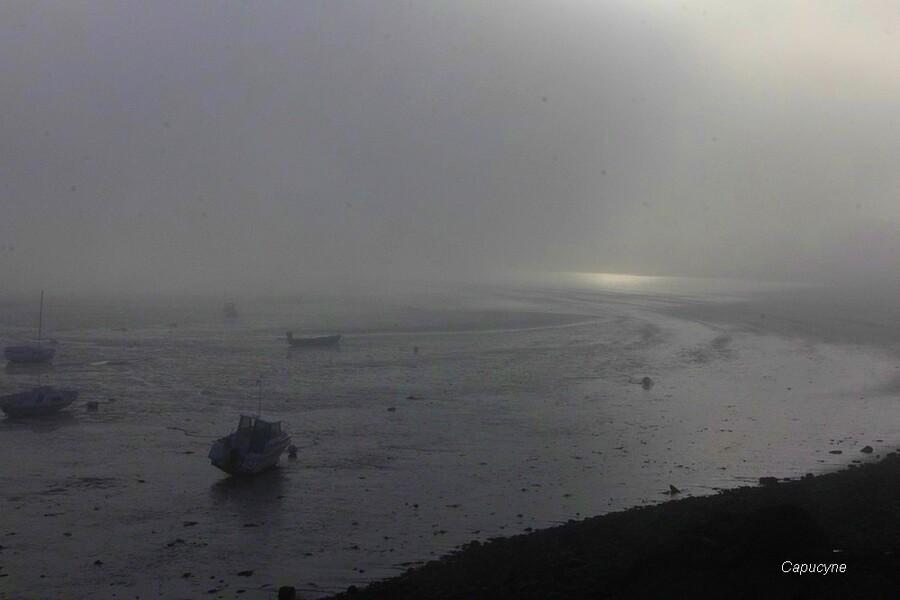 Poésie dans le brouillard