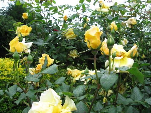jardin-029.jpg