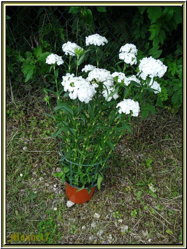Fête des fleurs à Thénac (charente maritime)