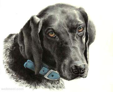 dog drawing susan
