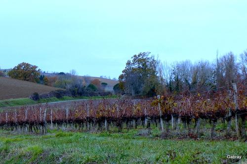 Vignes du Tarn en automne