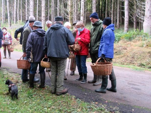 Les mycologues Châtillonnais ont sillonné le Morvan a la recherche d'espèces différentes de champignons...et leur quête a été fructueuse !