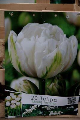 Famiflora : les bulbes sont là ! (1/2)
