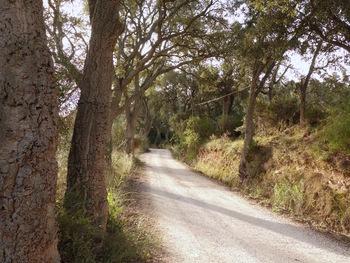 On marche sous les chênes lièges