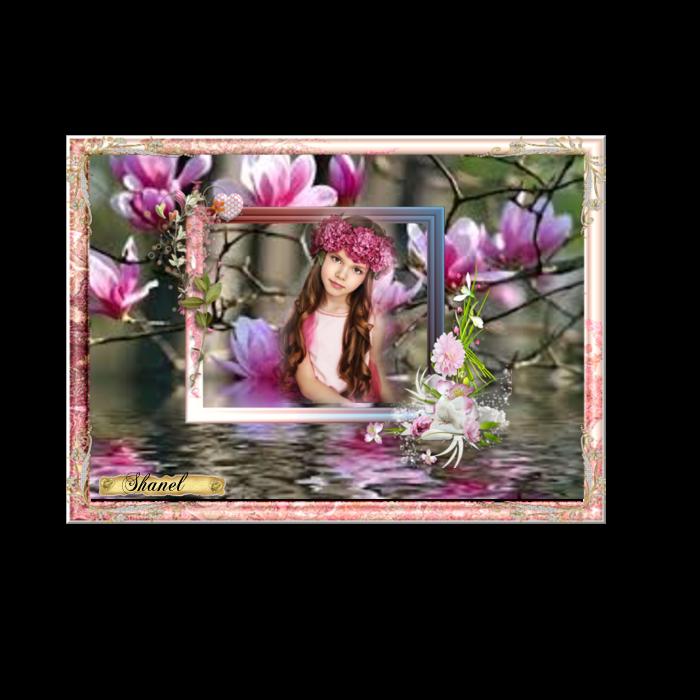 Le sourire des magnolias