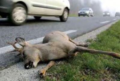Neutraliser les pièges pour la faune sauvage