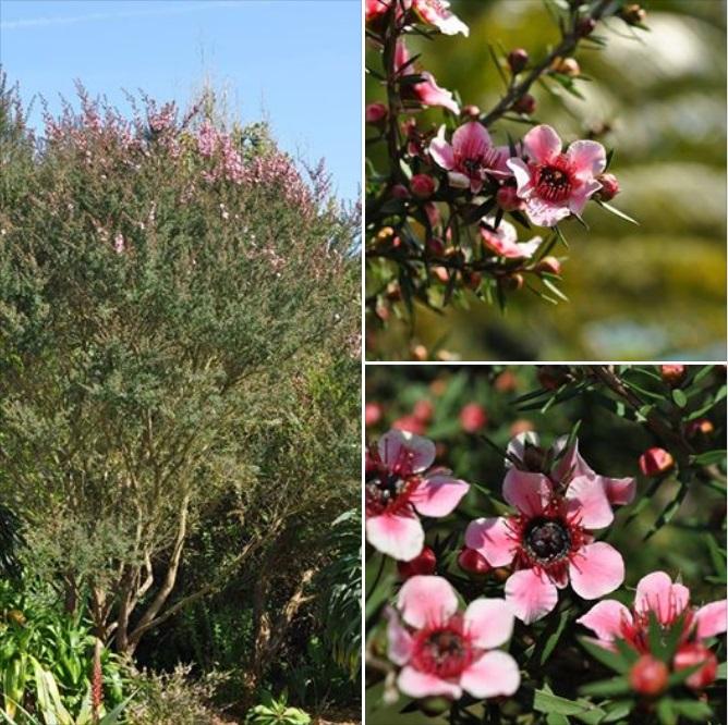 AZERTY plantes (HE)