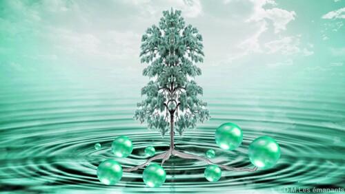 La magie des arbres sacrés