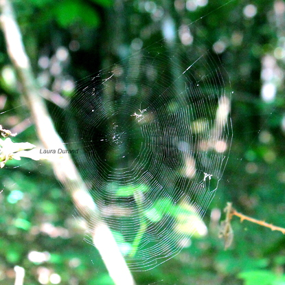 Toile d'araignée en forêt
